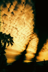 We're at the tipping point for climate change (bonus: face in the clouds) (kevin dooley) Tags: camera morning arizona sky cloud color tree film silhouette analog sunrise 35mm point book early lomo xpro lomography slim cross angle wide dramatic social palm 64 iso plastic ev processing change fujifilm network rogers diffusion innovation chandler titanium society adopt fujichrome viv vivitar ultra climate warming cultural global adapt tipping sustainability inform convince 22mm persuade t64 aplusphoto theperfectphotographer vivalaviv book0