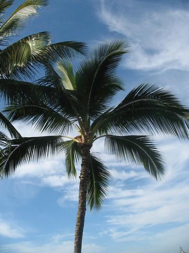 hawaii_palm_tree_pearl_harbor