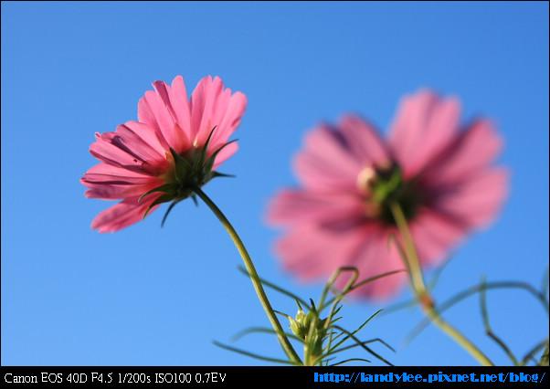9711-新社花海:Date with Bee_008.jpg