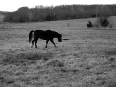 Pony - 27 November 2008