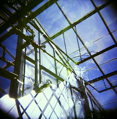 43960007 (The Greenery) Tags: film nature holga outdoor doubleexposure greenhouse bananaleaf colorholga color120