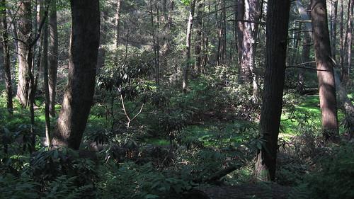 Caladonia State Park, PA