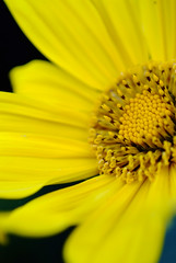 _DSF1248 (Toni.Wang73) Tags: flowers digital micro fujifilm f2  105mm s5pro jpg
