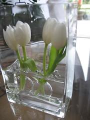 tulipe 004