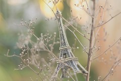169/365 je ne sais pas (Honey Pie!) Tags: paris france tree branches eiffeltower frana days honey toureiffel torreeiffel 365 ameliepoulain rvore galhos poulain softtones amliepoulain 365days 365daysproject 365dias 365daysofhoney