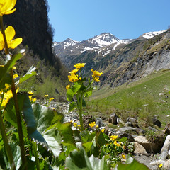 Marigolds nested amid the magnificent Alpine mountains. (Bn) Tags: park flowers blue shadow sky plants sun mou