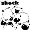 shock sheep msn
