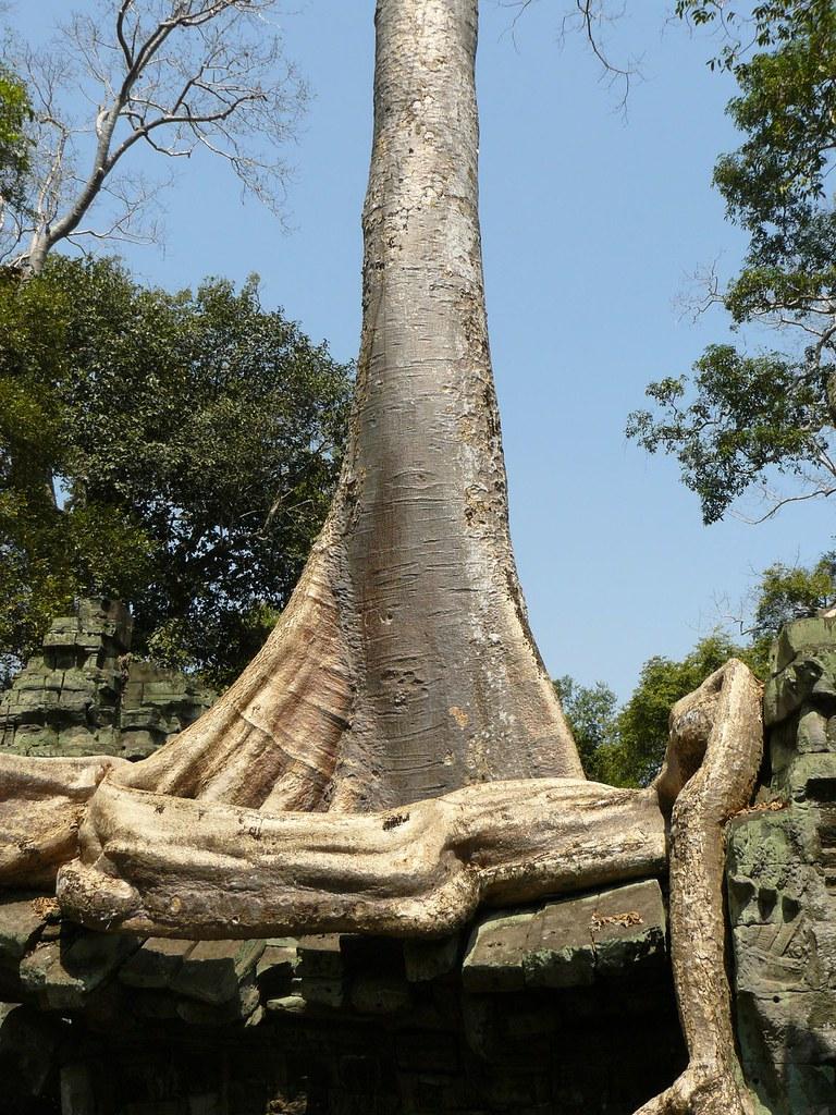 Cambodge - Angkor #86