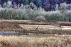 Eagle refuge (jodi_tripp) Tags: trees winter grass eagle wildlife flight wa refuge ridgefield firstquality joditripp challengeyouwinner megashot wwwjoditrippcom photographybyjodtripp