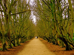 WALKING BETWEEN TREES (Akbar Simonse) Tags: trees holland tree netherlands thenetherlands zeeland beech domburg demanteling oostkapelle infinestyle betterthangood theperfectphotographer 200000000stagelovers nederlandvandaag akbarsimonse
