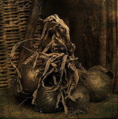 Onion Still Life (~J0~ (away)) Tags: uk stilllife square onions textures norwich thebelljar tnxtoleschick tnxtosplendoranddemise bsquarecontest