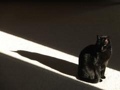 Pure Art (indigo_jones) Tags: light shadow sunlight white black cat blackcat angle framed supermodel great luna chiaroscuro