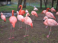 旭山動物園 ととりの村