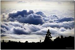 Bosque a contranube (Chema Concellón) Tags: sky españa naturaleza clouds contraluz landscape spain árboles paisaje bosque cielo nubes tenerife teide islascanarias parquenacional 100vistas chemaconcellón newphotographers coronaforestal anawesomeshot contranube