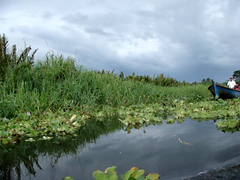 Bocas Del Toro Panama (Wha'ppen) Tags: travel river costarica panama bocasdeltoro centralamerica sleepinggrass travelvideo dormilonas