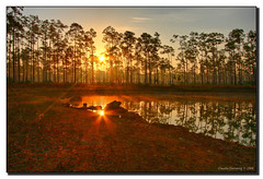 Two Suns (Fraggle Red) Tags: orange sun mist lake yellow fog sunrise dawn nationalpark florida smoke evergladesnationalpark campground jpeg pinetrees hdr enp canonefs1785mmf456isusm streaksoflight 6exp specland longpinekey aplusphoto diamondclassphotographer flickrdiamond miamidadeco dphdr
