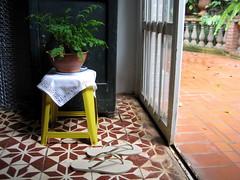 fern on stool (parttimefarm) Tags: plants fern yellow brasil tiles flipflops stool chacara echapora