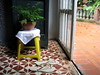 fern on stool (parttimefarm) Tags: plants fern yellow brasil tiles flipflops stool chacara echapora