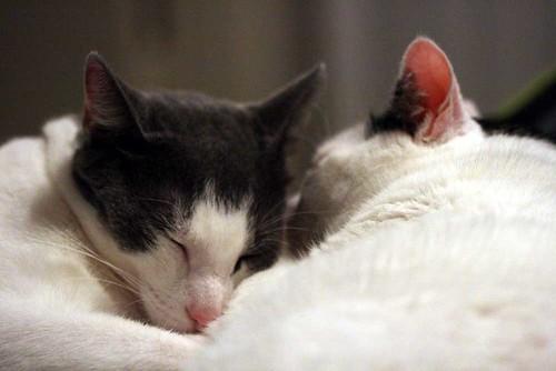 samson leo cuddle