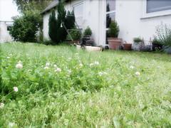 My frontgarden (Anita Thomhave Simonsen) Tags: garden lawnmover cuttingthegrass anitathomhavesimonsen