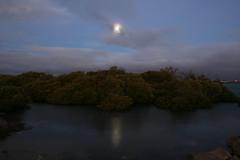 garden island moon (Mangrove Rat) Tags: moon mangroves southaustralia gardenisland