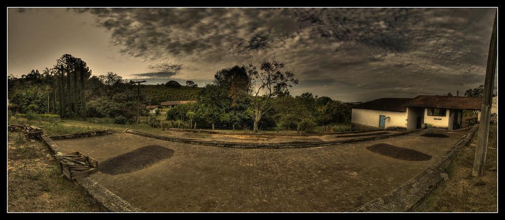 Terreiros de café (Panorama) #5 Farm