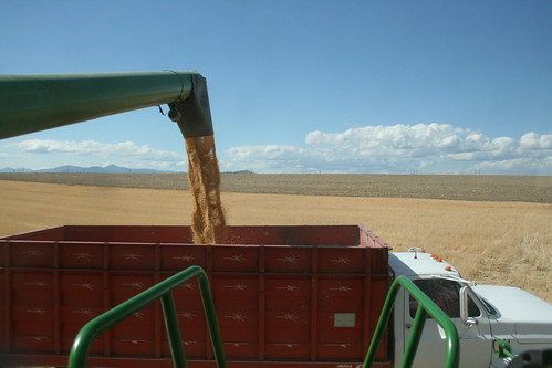 Alan driving the grain truck..