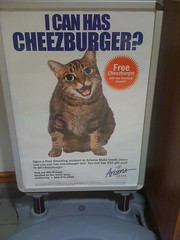 i can haz checking account? (alist) Tags: move meme alist robison cheezburger lolcat alicerobison ajrobison
