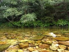 Detalle del Agua del Río Esva