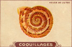 coquillages7