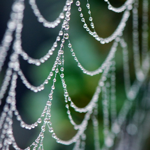 Drip Drops and the Spider Web