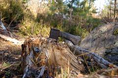 kirves 666 (iivo) Tags: autumn axe kirves syksy retki