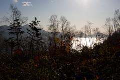 倒木地帯から輝く湖面を振り返る