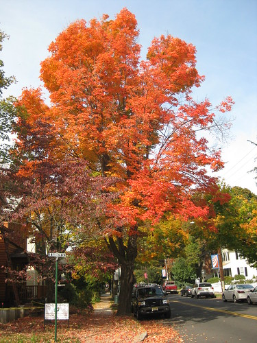 Fall foliage in New Hope, Pennsylvania