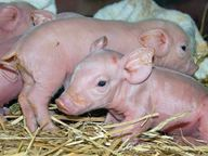 Kinship Circle - 2008-10-14 - Piglets Of The Flood 11