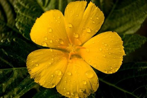 2008 Oct 25 flower #1