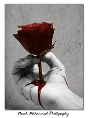 My Flower Bleeding (     ) Tags: flower bleeding norah