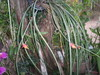 Bromelia fina (não sei nome) (nilgazzola) Tags: de foto orchids ou com orquidea tirada maquina echapora gazzola nilgazzola