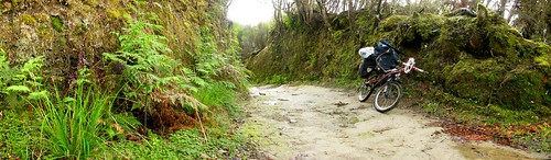 A rare cycle-able part of the  Mangapurua Track, Whanganui National Park, New Zealand