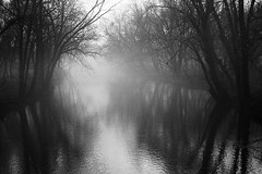 Distorted Shadows and Reflections (rob_valine) Tags: blackandwhite fog pennsylvania foggy rivers creeks pottstown potofgold kodaktrix400 petri7s manatawnycreek southeasternpennsylvania eliteimages unlimitedphotos oneofmypics robvaline