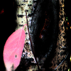 Ages (josefontheroad) Tags: poplar searchthebest best dogwood soe pictureperfect awesomepicture tistheseason otw outstandingshots flickrsbest flickrstars platinumphoto visiongroup crystalaward diamondclassphotographer amazingamateur dreamwithme goldsealofquality proudshopper topphotography flickrsexquisiteshots multimegashot damniwishidtakenthat awardtree goldenheartaward thebestgallery dragondaggerphoto novavitanewlife zuzkasfaves seasons'magic newgoldenseal
