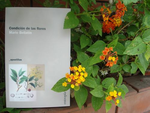 Condición de las flores