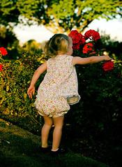 rose red (Le Fabuleux Destin d'Amélie) Tags: winter red roses summer two flower girl childhood rose wonder happy 50mm evening kid toddler child play little pentax joy happiness blonde imagination rv joyful rosegarden nsr laurarobertslightroompresets ga095 gettyimagesportraits