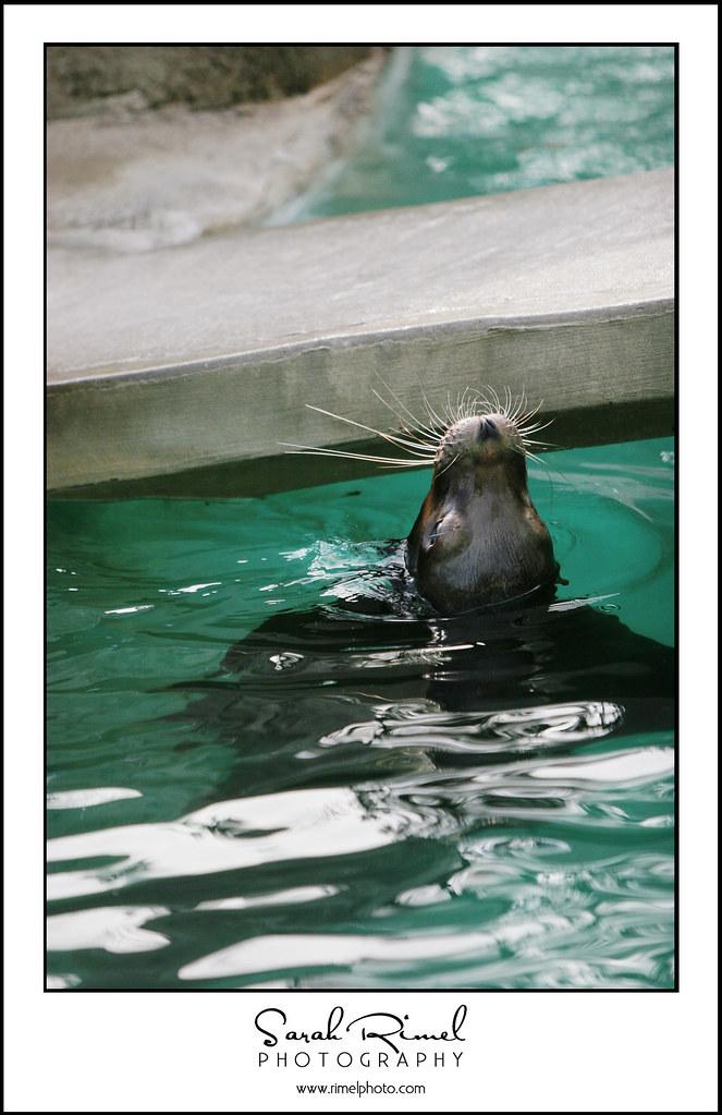 feb zoo 40