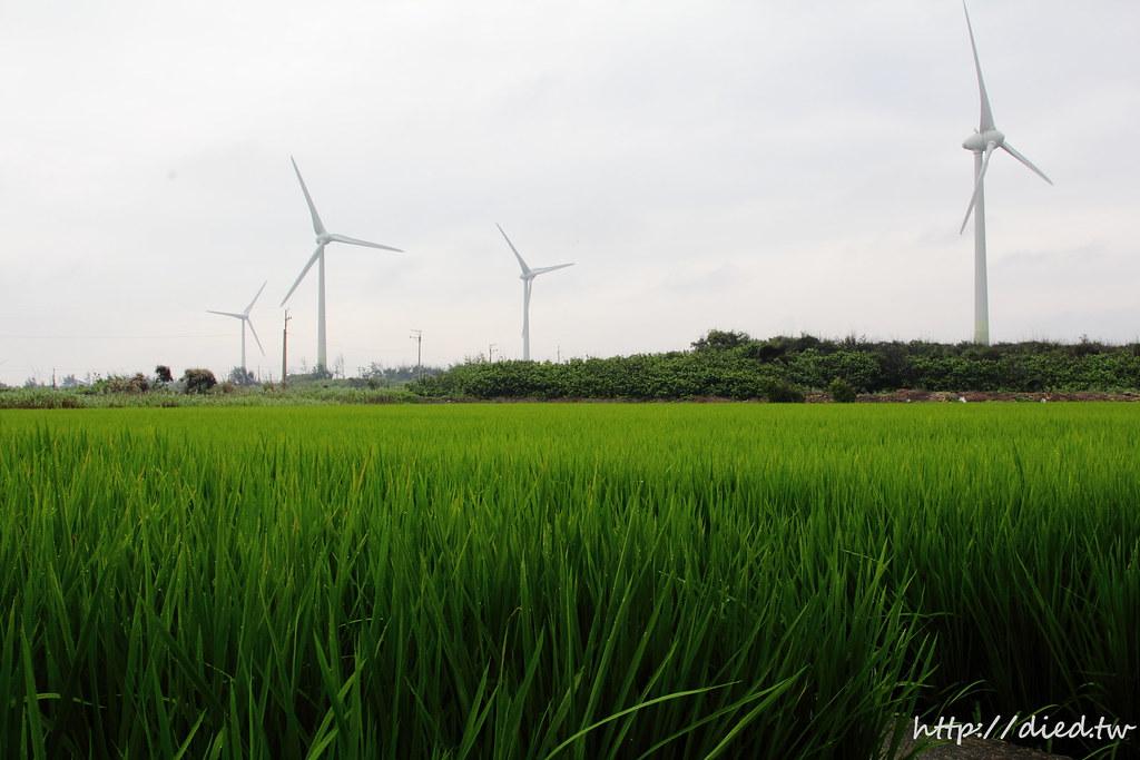 稻田 風力發電機