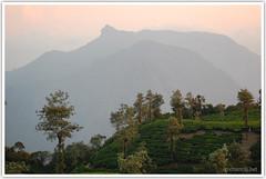 Of mountains and teas (Intrudr) Tags: nikon kerala d40 mohanraj nikond40 valaparai malayalikkoottam kfm3 malayalikkottamkfm3 expeditiontodewilds mohanrajk mohanrajnet