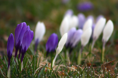 Signs of Spring 3