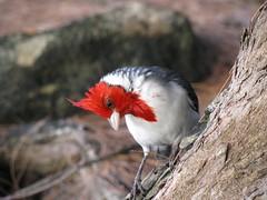 the bird (Ir. Drager) Tags: usa bird beach nature animal geotagged hawaii kauai haenastatepark