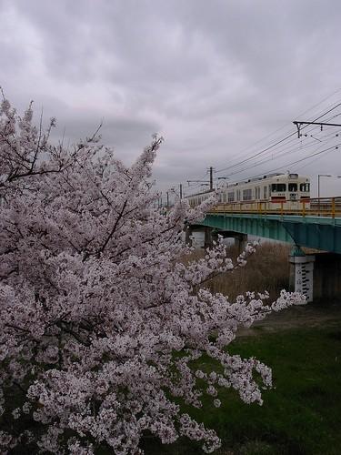 春の網干線