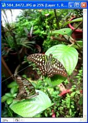 Butterfly collage tutorial - use free transform to rotate the image